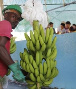 bananenbieger1