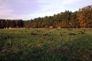 Waldputen Fahrenzhausen
